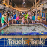 Photo of the Touch Tank at the Key West Aquarium