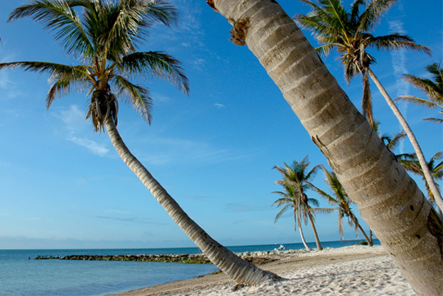 View of a beach with various palm trees in Key West